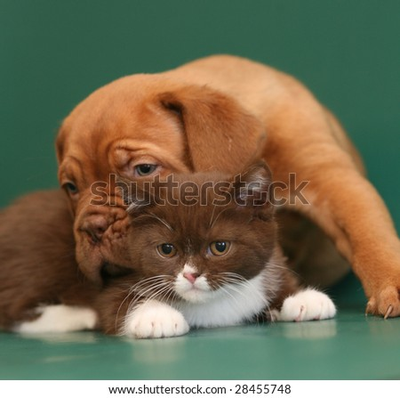 Puppy and kitten. - stock photo
