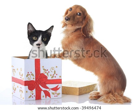 Puppy and kitten and the Christmas present. - stock photo