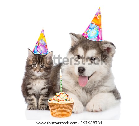 Puppy and kitten in birthday hats. isolated on white background - stock photo