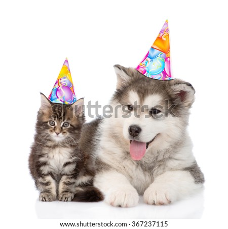 Puppy and kitten in birthday hats looking at camera together. isolated on white background