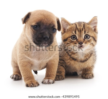 Puppy and kitten isolated on a white background.