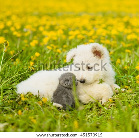 Puppy and kitten looking at each other on the green grass