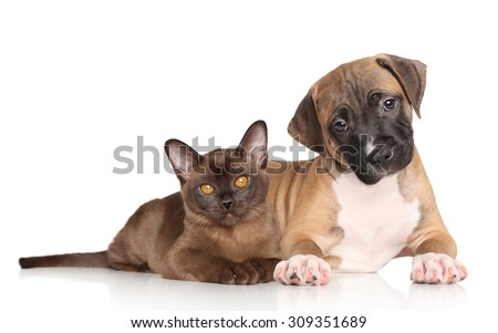 Puppy and kitten lying down on a white background - stock photo