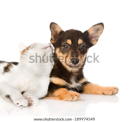 puppy and kitten lying together. isolated on white background