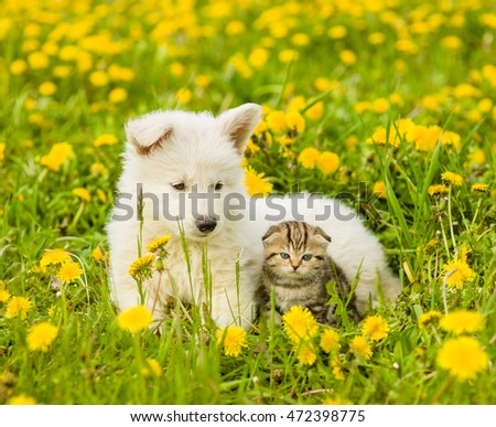 Puppy and kitten lying together on a dandelion field