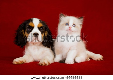 Puppy and kitten on red background - stock photo