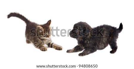 Puppy and kitten playing isolated on white background - stock photo