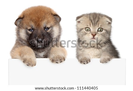 Puppy and kitten show paws above white banner. isolated
