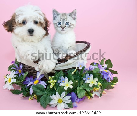 Puppy and kitten sitting in a basket with flowers around them with copy space. - stock photo