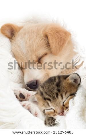 Puppy and kitten sleeps - stock photo