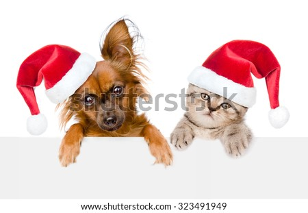 Puppy and kitten with red christmas hats peeking from behind empty board and looking at camera. isolated on white background - stock photo