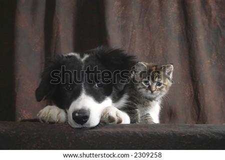 puppy and kittie stare - stock photo