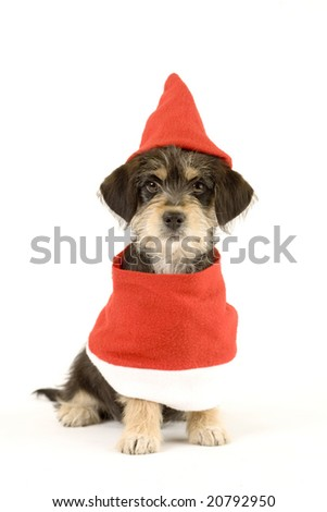 puppy and santa hat