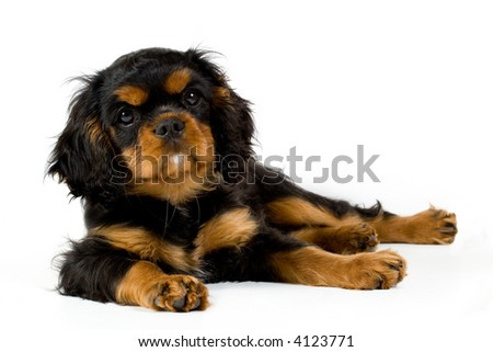 Puppy at rest - stock photo