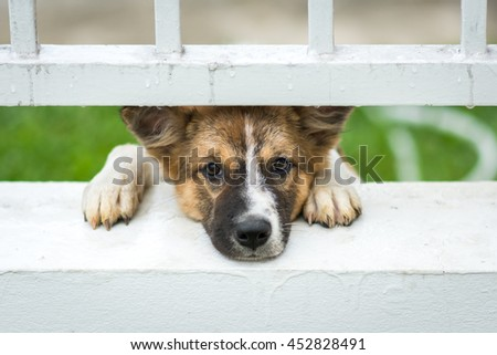 puppy behind bars in shelter.