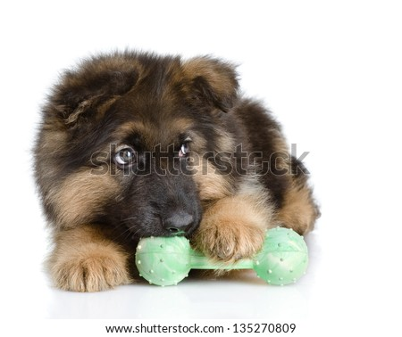 puppy bites a toy. looking away. isolated on white background - stock photo