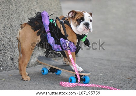 Puppy bulldog in a cheerful ballerina costume learning how to ride a skateboard - stock photo
