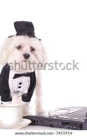 puppy business - stock photo