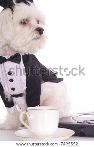 puppy business vertical - stock photo