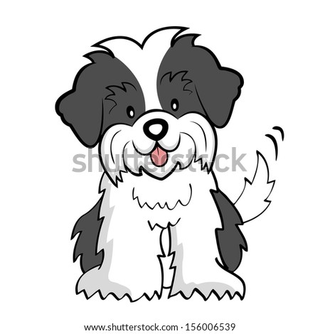 Puppy cut Shih tzu isolated - stock photo