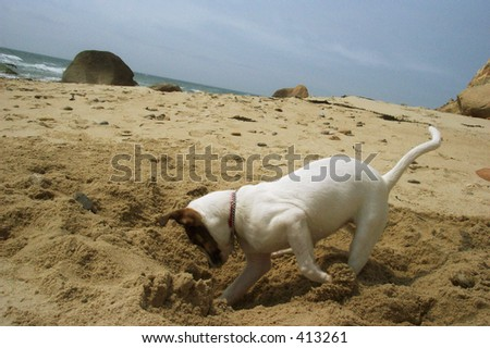 Puppy Digging in sand on Beach - stock photo