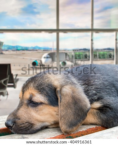 puppy dog abandoned at the airport because it is banned from flying with the pet by the pet policy - stock photo
