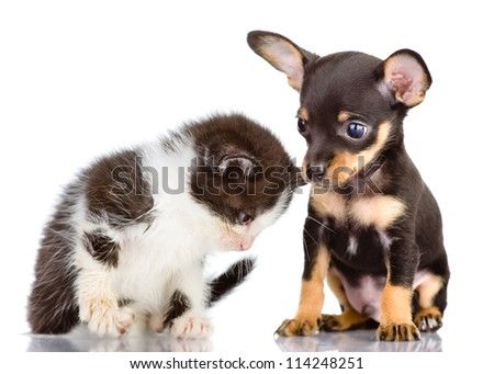 puppy dog and sad kitten. Isolated on a white background - stock photo