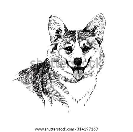 Puppy dog hand drawn, black and white illustration sketch - stock photo