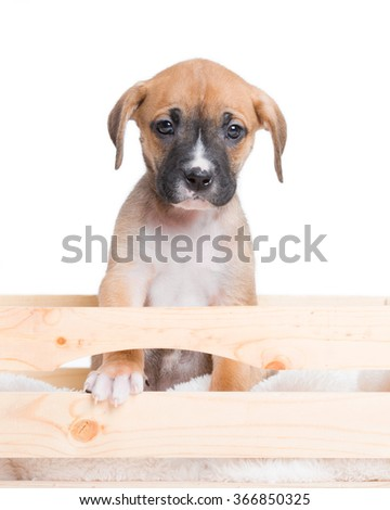 Puppy Dog in Crate Wooden Box with White Background - stock photo