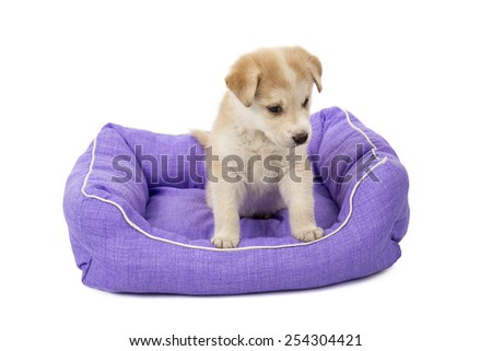 Puppy dog in his bed looking lost against a white background - stock photo
