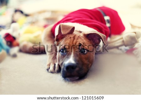 Puppy dog in santa christmas outfit - stock photo