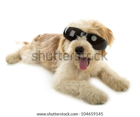 Puppy dog in the glass isolated on  white background - stock photo