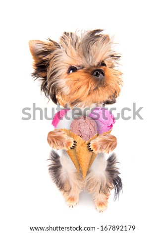 puppy dog licking with ice cream isolated on white - stock photo