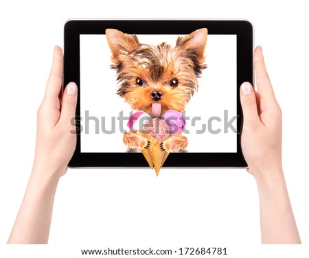 puppy dog licking with ice cream on a digital tablet screen