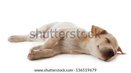 puppy dog lying isolated on white background - stock photo