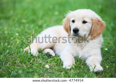Puppy dog on green grass,animals - stock photo