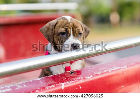 puppy dog on pickup car - stock photo