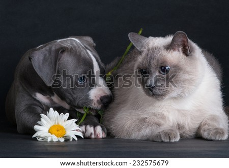 puppy dog playing with a cat on a black background in the studio