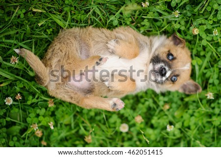 puppy dog sitting on the green grass