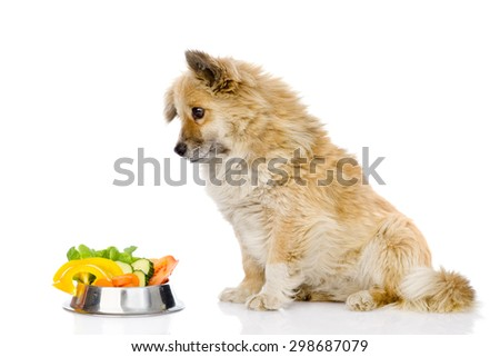 puppy dog sitting with a bowl of vegetables. isolated on white background - stock photo