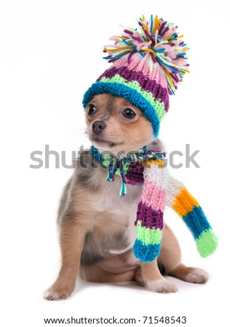 Puppy Dressed For Cold Weather With Scarf and Hat, Isolated - stock photo