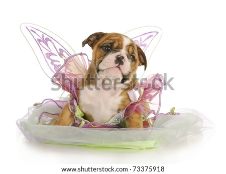puppy dressed like an angel - adorable english bulldog puppy - 7 weeks old - stock photo