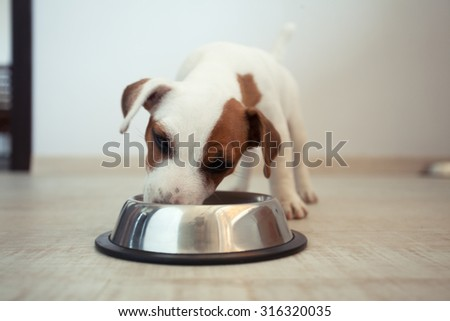 Puppy eating food. Dog - stock photo