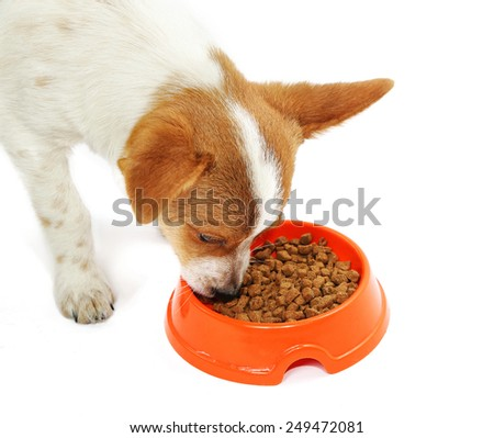 Puppy eating food from dish, isolated on white background - stock photo