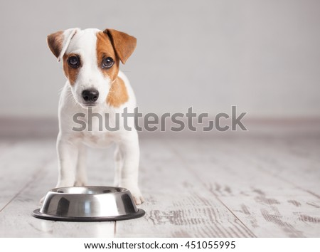 Puppy eating foot. Dog eats food from bowl