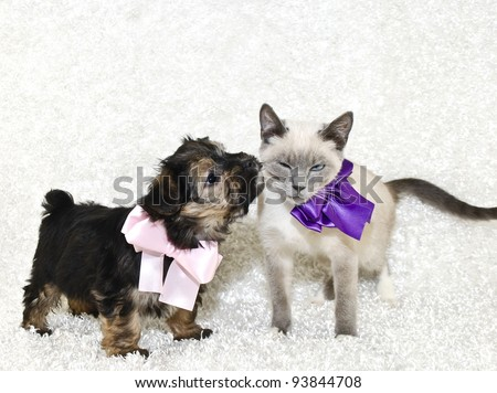 Puppy giving kisses to a not so willing kitten with a eww look on her face. On a white background with copy space.