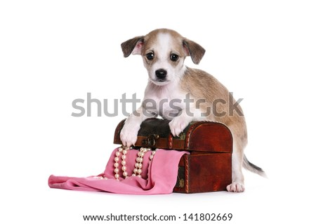 Puppy, half-breed, on a white background