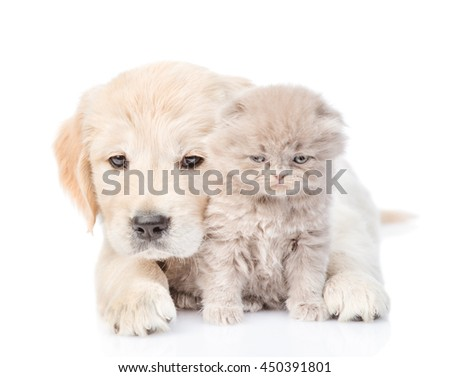 Puppy hugging a small kitten. isolated on white background - stock photo