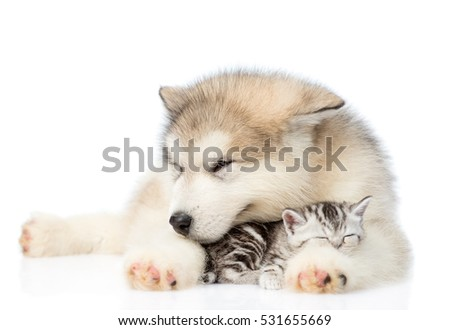 Puppy hugging sleeping kitten. isolated on white background