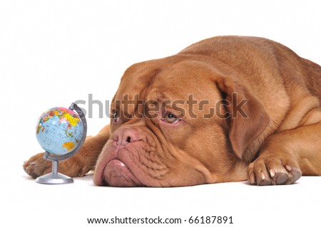 Puppy if thinking of its dream travels around the globe - stock photo